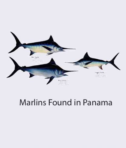 Marlins Found in Panama